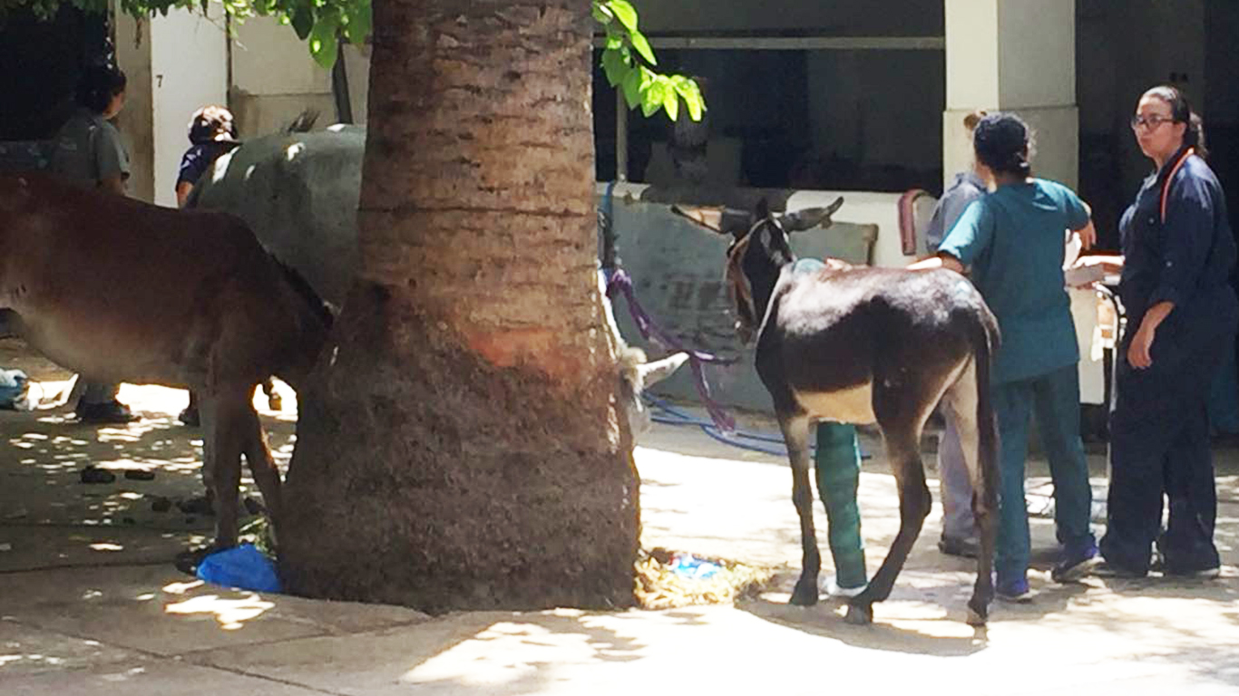 Two donkeys with their owner stand talking with a veterinarian outside of the American Fondouk - Fes