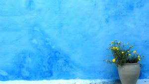 Rabat, Morocco. A splotchy blue tinted wall is the backdrop a grey pot of small yellow flowers
