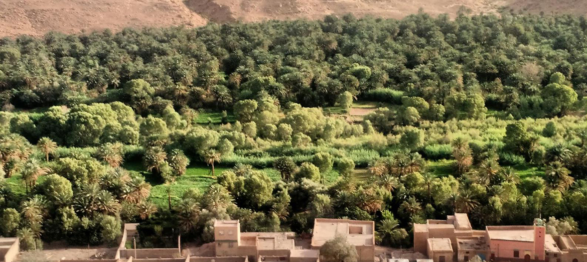Behind the roofs of earthen buildings, a vast green oasis of grass and trees blankets the land