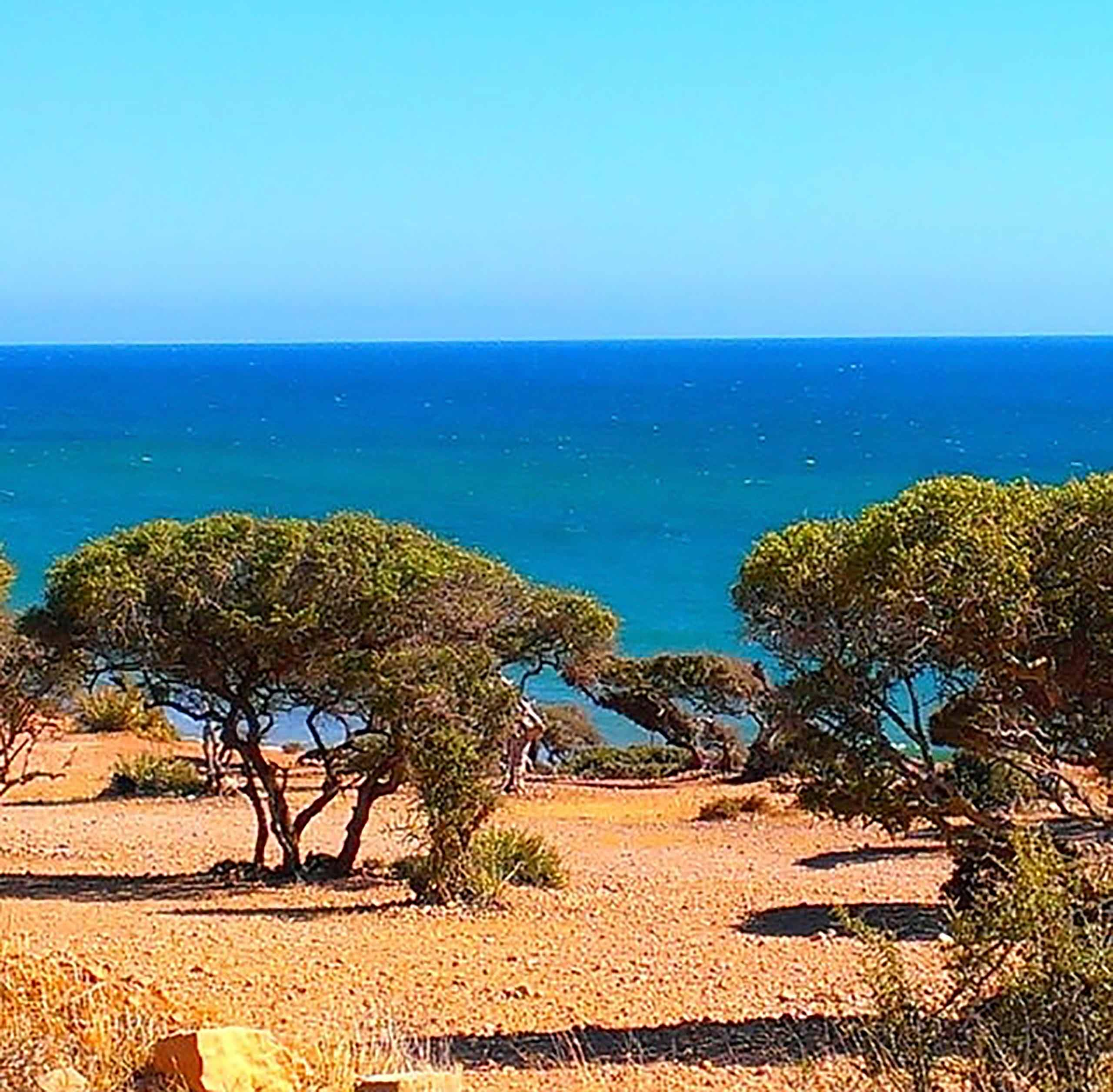 Trees on a desert landscape with the sea in the background